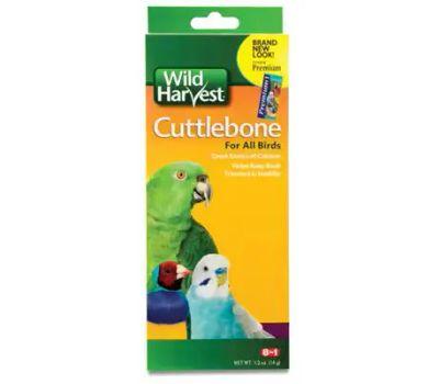 Spectrum C8262 Wild Harvest Wild Harvest Cuttlebone